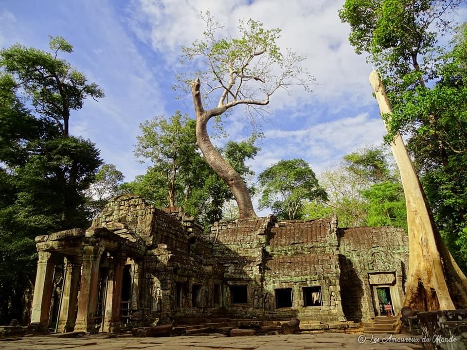 Ta Prohm - Temples d'Angkor au Cambodge