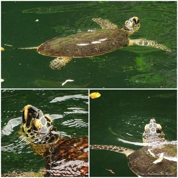 Trou de la tortue à Ouvéa