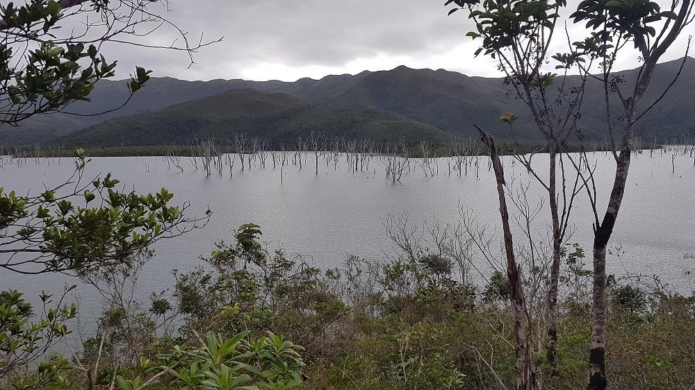 La forête coulée au Parc de la Rivière Bleue en Nouvelle-Calédonie