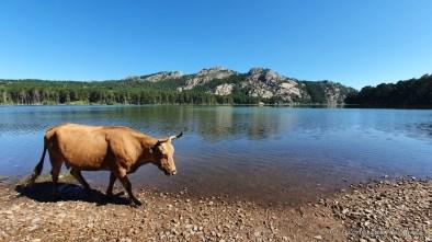 Lac de l'Ospédale - Corse