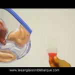 Comment plier, mettre et comment retirer la cup (coupe menstruelle) ?