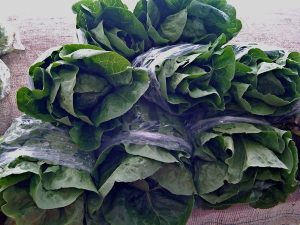 romaine bunches at the brickworks