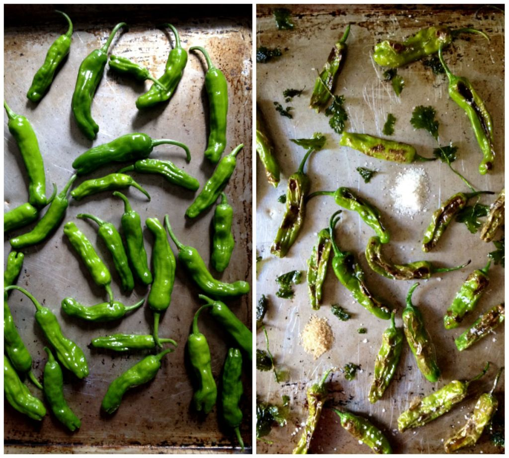 raw and fried shishito peppers
