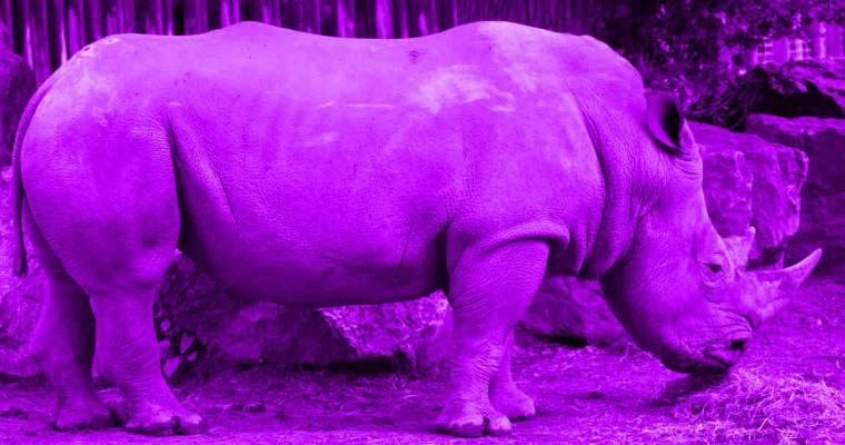 lesbian fact - purple rhino