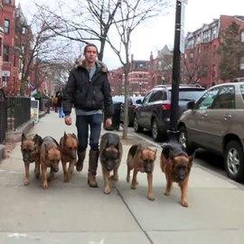 L'homme qui murmure à l'oreille des chiens