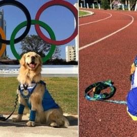Les animaux de compagnie ont aussi leurs Jeux olympiques !
