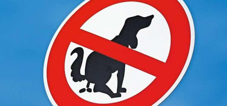 À cause de leurs crottes, les chiens sont bannis de certains parcs neuchâtelois