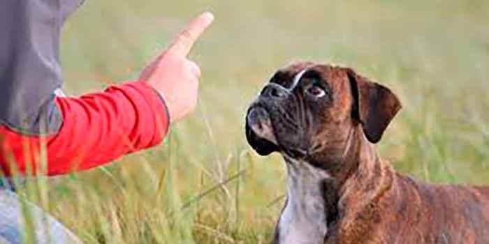 Liste des éducateurs canins agréés