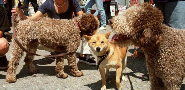 Une chienne électrocutée à cause d'un réverbère