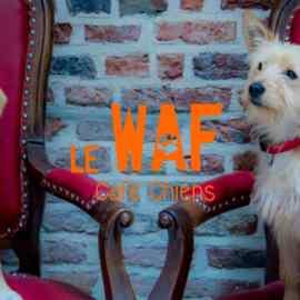 Le premier bar à chiens en Europe ouvre à Lille (FR)
