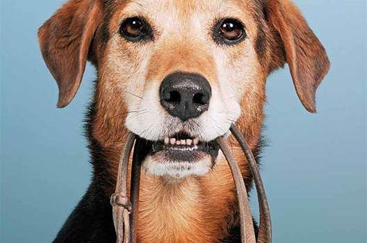 Un chien chez moi – est-ce possible ?