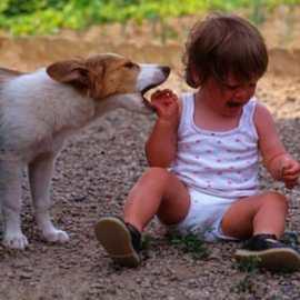 Accidents causés par des chiens