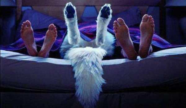 50% des Suisses dorment avec leur animal