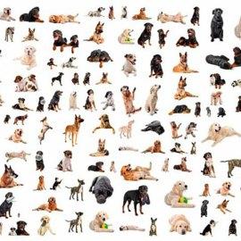 Le races de chiens