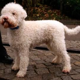 Son chien courageux fait fuir deux voleurs