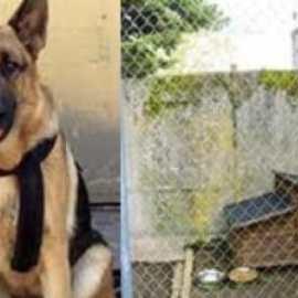 «Opération commando» pour lui enlever son chien