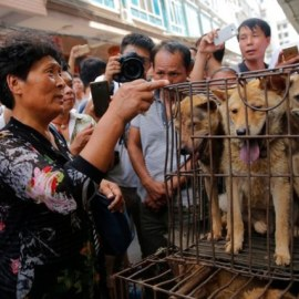 Ils revendaient la viande de chiens empoisonnés