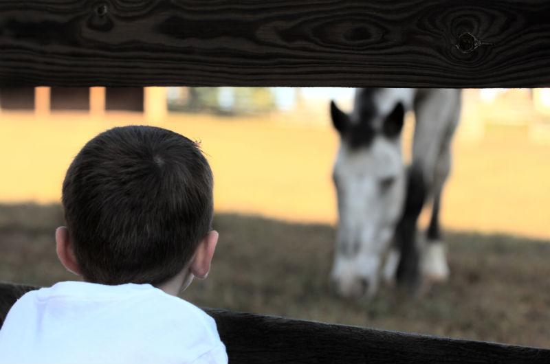 pour les enfants - rencontres avec cheval