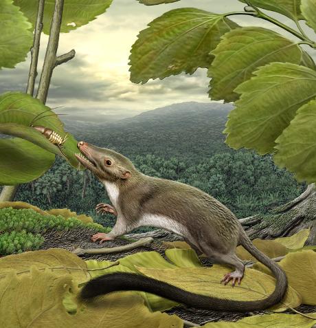 Ecco l'antenato di tutti i mammiferi placentati