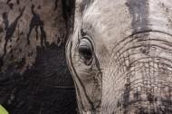 Il senso del lutto negli animali