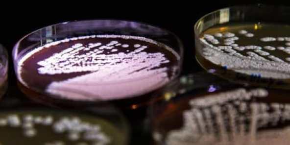 Come i batteri acquisiscono la resistenza agli antibiotici