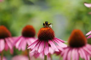 Comment participez-vous au maintien de la biodiversité au quotidien?