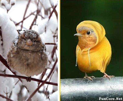 Oiseaux et le froid
