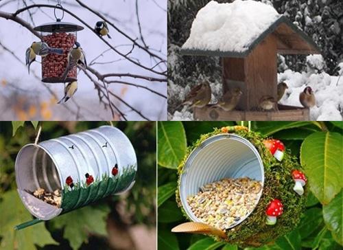 Oiseaux - insectes - nourriture riche en protéine