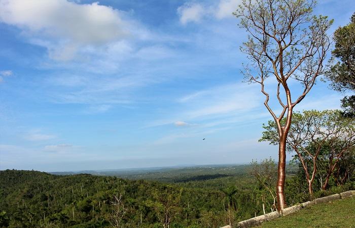 cuba las terrazas tourist tree