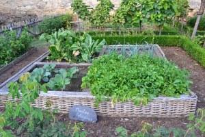 potager-legumes-verts-les-ethicuriens