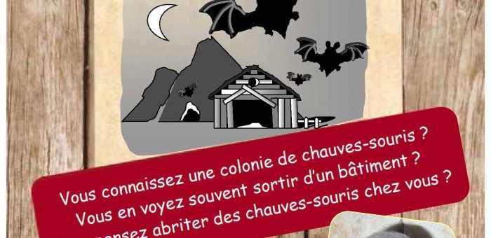 Recensement des gîtes estivaux de chauves-souris en Eure-et-Loir