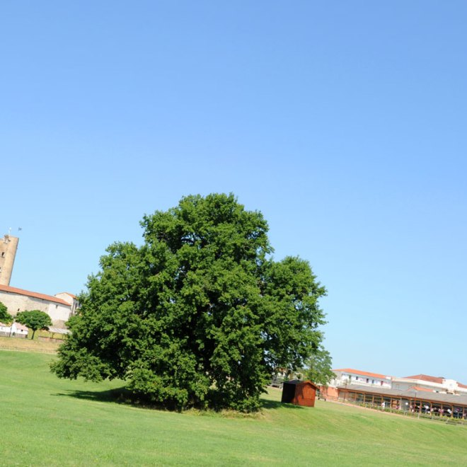 chateau-medieval-montrond-foreziales-2