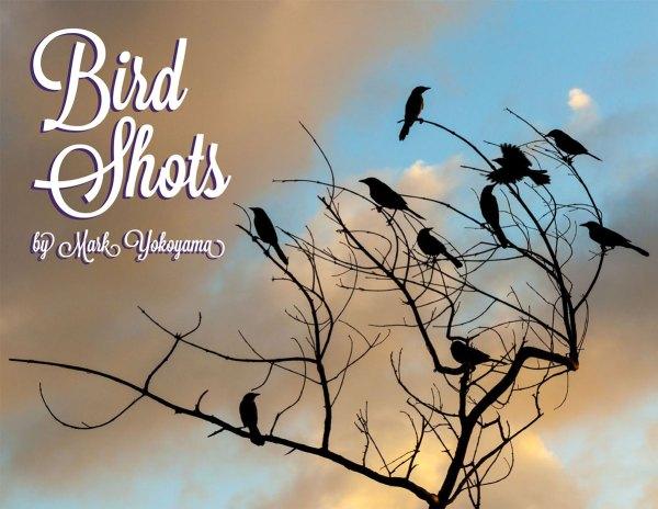 Bird-Shots-web