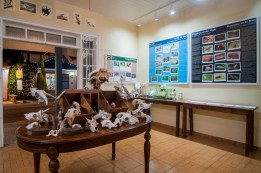 Amuseum Naturalis is open for special preview hours Tuesdays and Thursdays from 4-8pm.