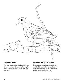 AAM-Mountain-Dove