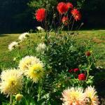 Fleurs pivoines maison d'hotes les hauts de saulies