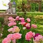 Fleurs du jardin des hauts de saulies