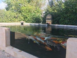 aquarium poisson koi des jardins d'eau