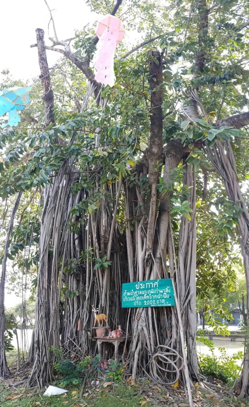 Thaïlande, on continue d'explorer Chiang Mai 👟 3