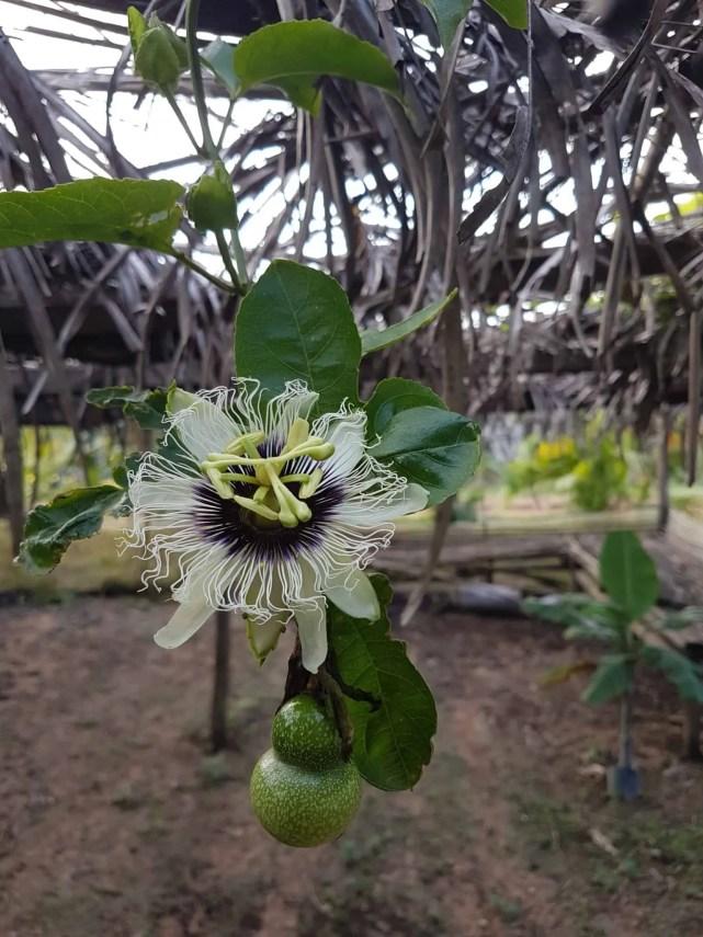 Cambodge, découverte du célèbre poivre de Kampot 🌶 17