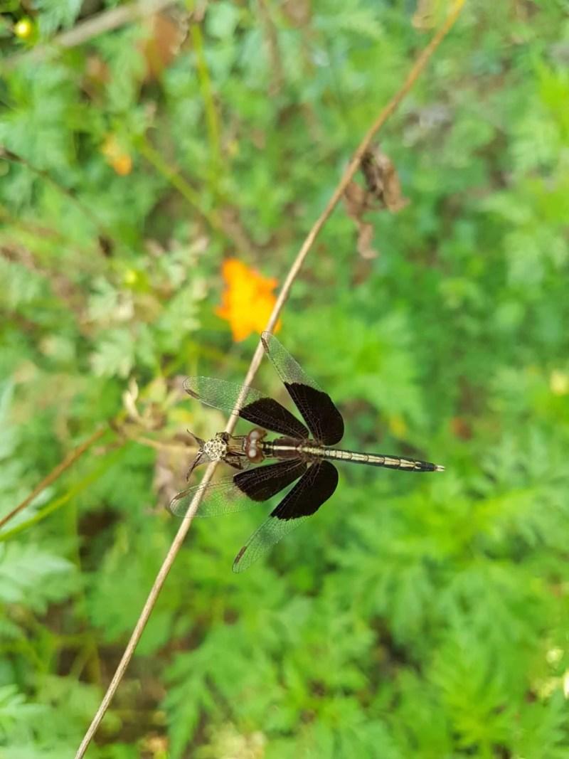 Cambodge, Kep et sa ferme aux papillons 🦋 33