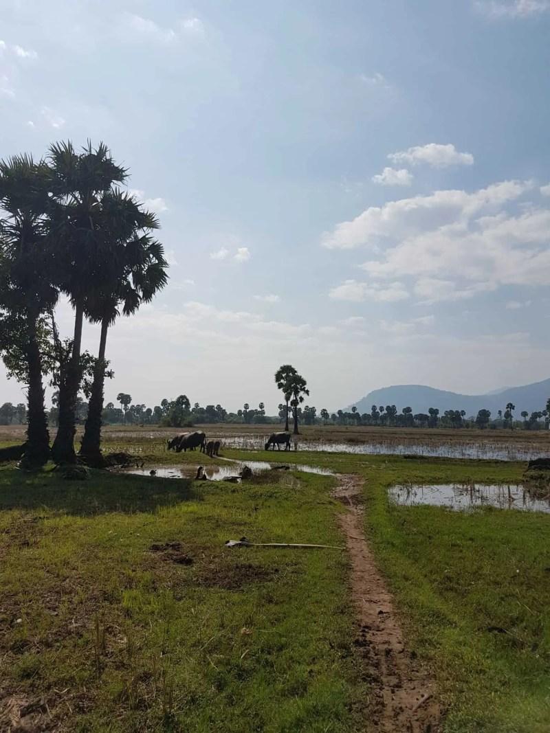 Cambodge, marais salants et hôtel de folie à Kampot 🤩 1