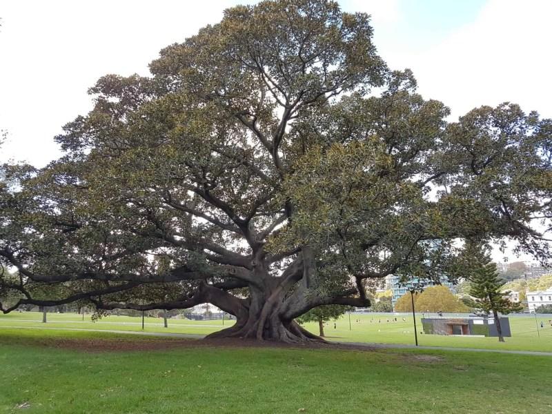 Australie, le jardin botanique de Sydney 🌺 7