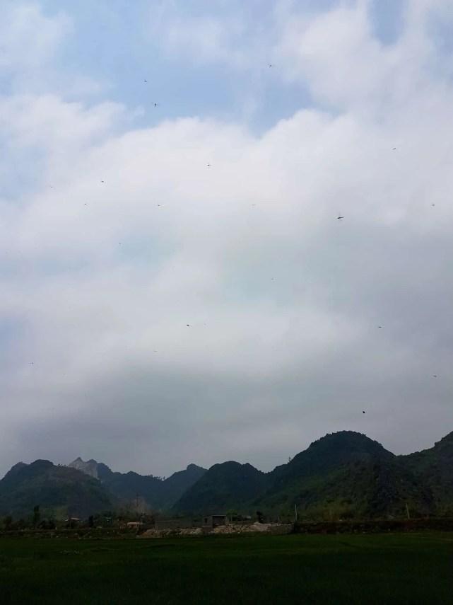 Vietnam, la magnifique réserve naturelle de Vân Long 🌾 15
