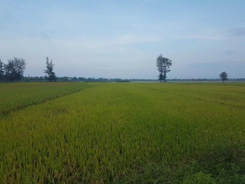 Vietnam, balade à vélo dans la campagne de Hoi An 🚴 20