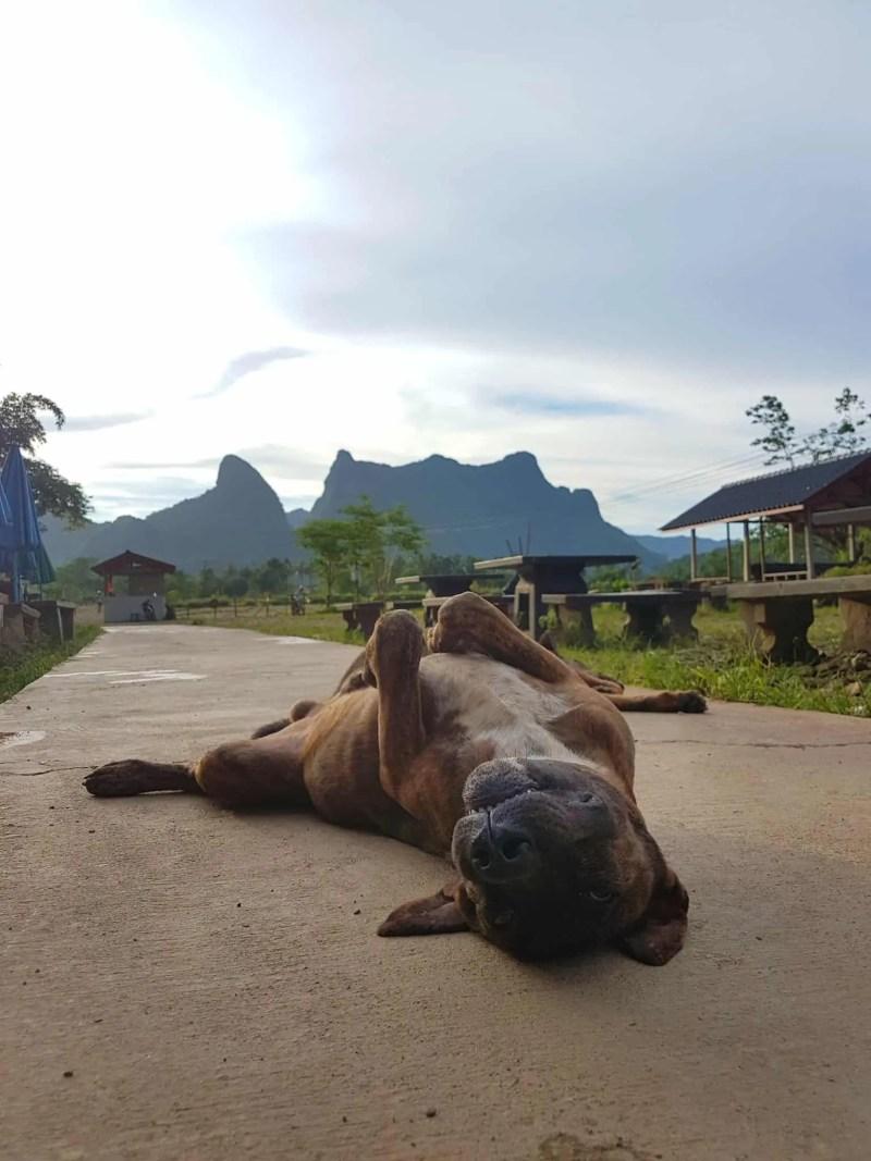 Laos, au cœur de la magnifique campagne de Vang Vieng en moto cross 🏍 15