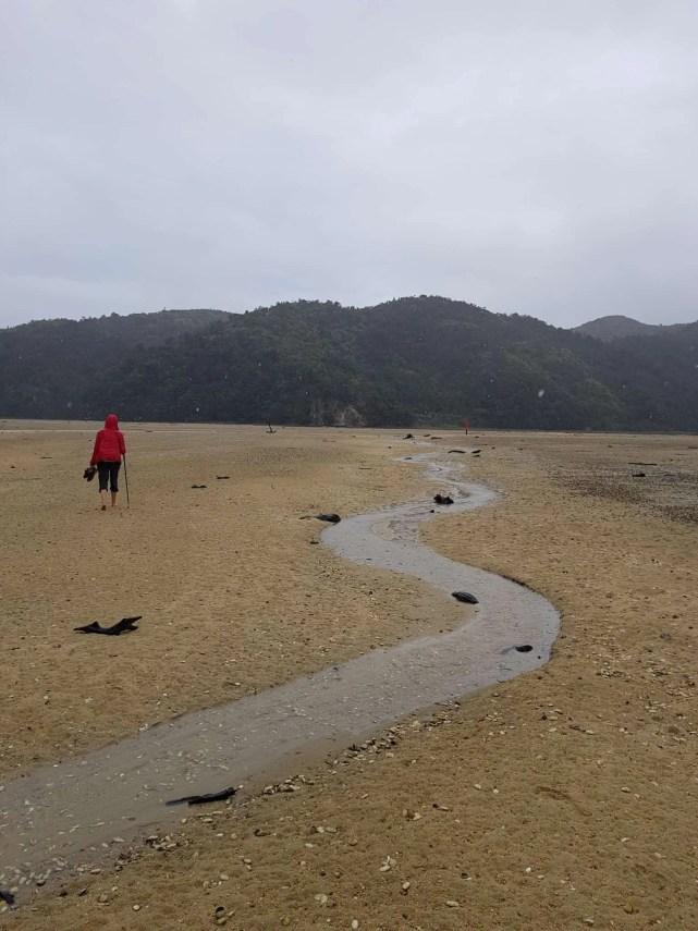 Nouvelle-Zélande, 24 km de randonnée sous la pluie dans le parc d'Abel Tasman 🌧 24