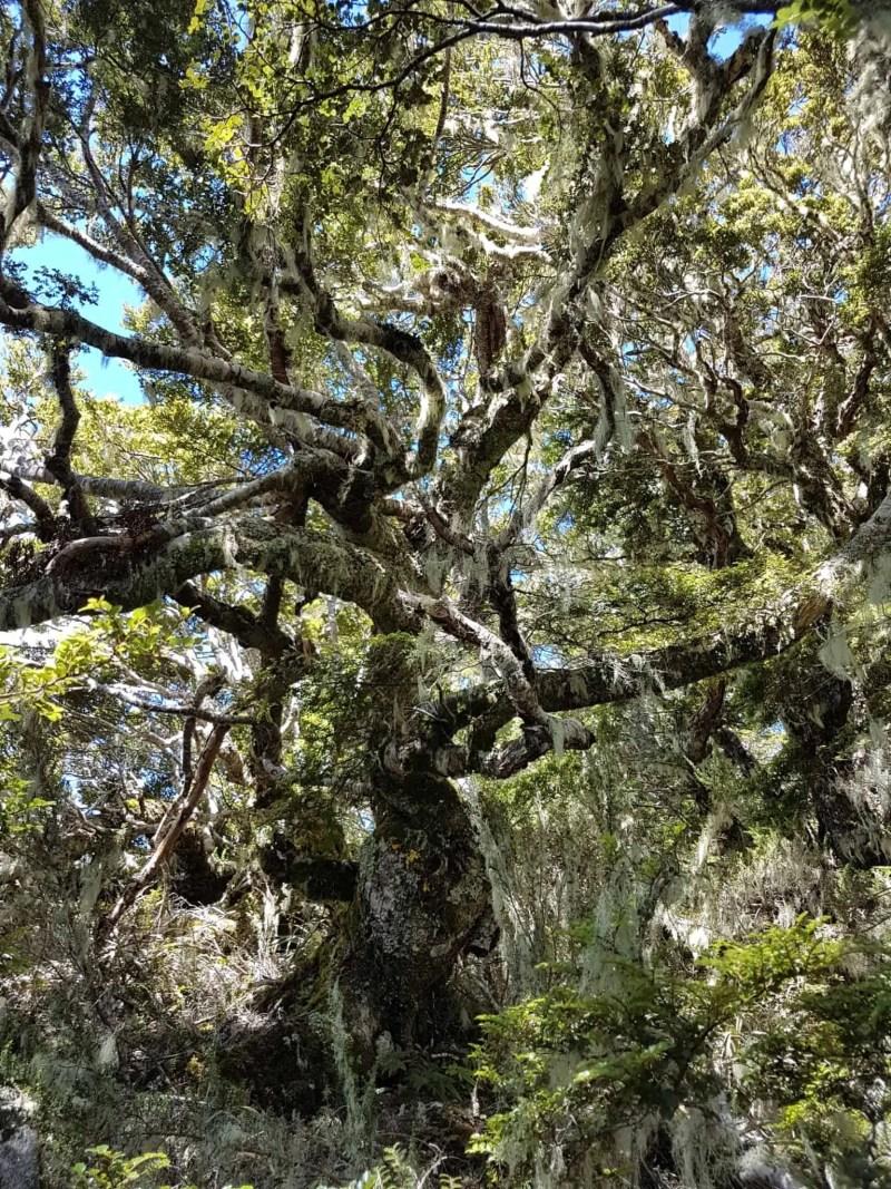 Nouvelle-Zélande, la Mount Burns Tarns Track une rando hors des sentiers battus 👟 3