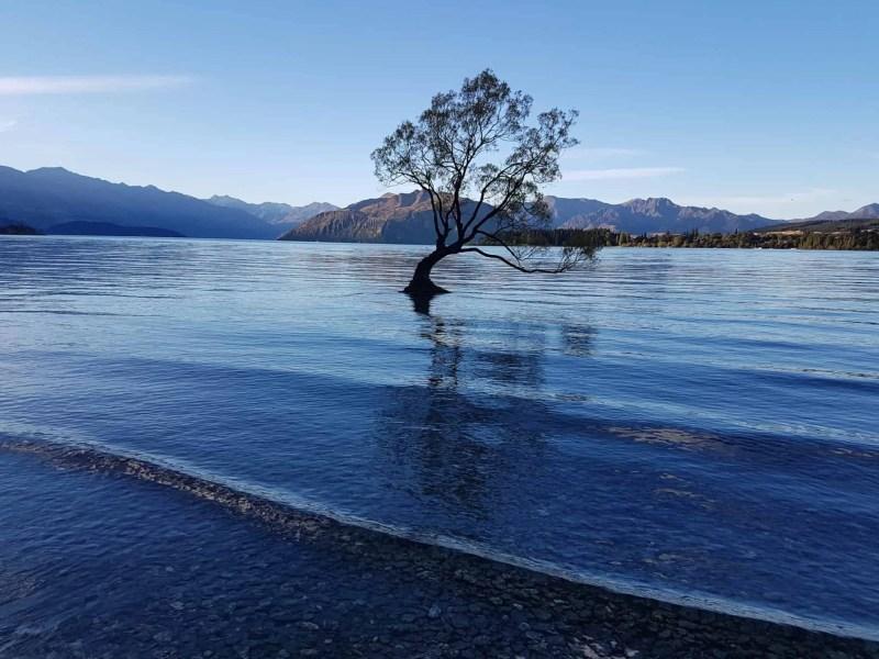 Wanaka Tree en Nouvelle-Zélande