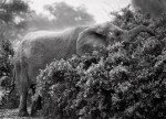 salgado-africa-elephant